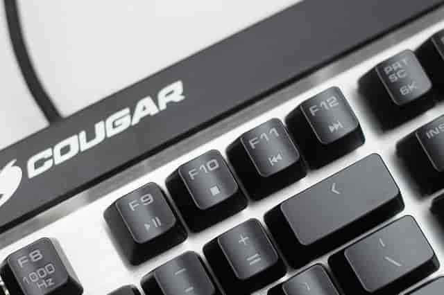 cougar-attack-x3-box-11